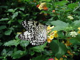 butterfly_closeup2.jpg